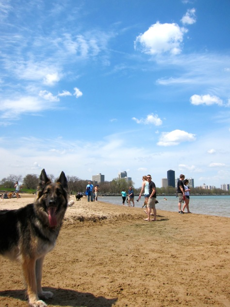 Dog Beach, Chicago, IL | Intentional Travelers