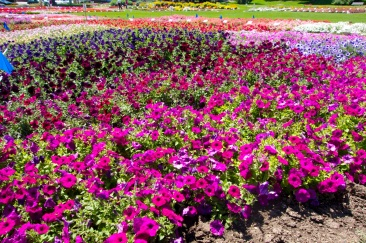 Annual Flower Trial Garden