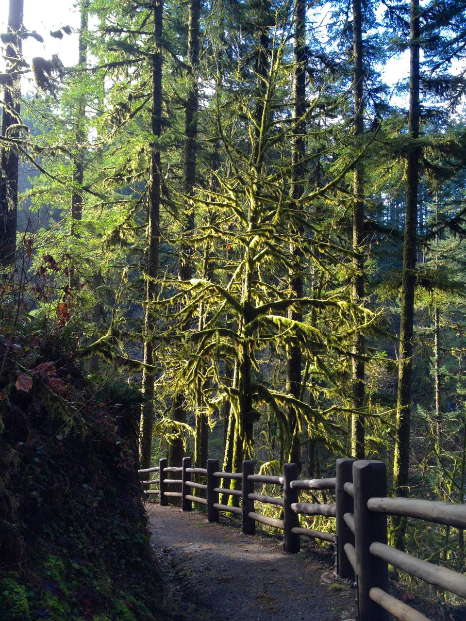 Silver-Falls-State-Park-Oregon3