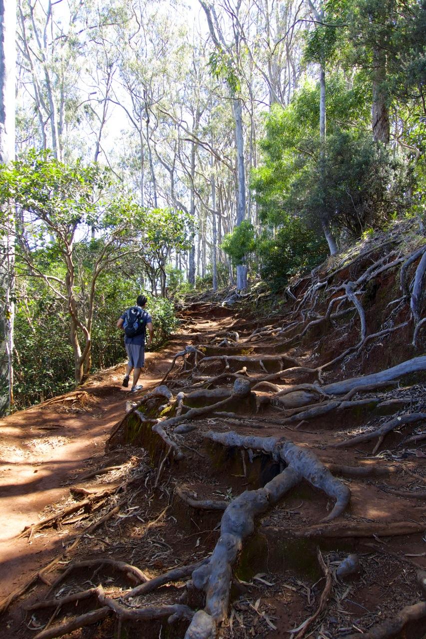 Aiea-Loop-Trail-05