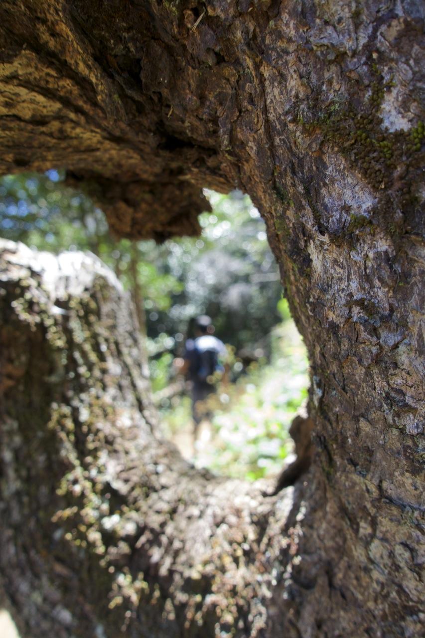 Aiea-Loop-Trail-09