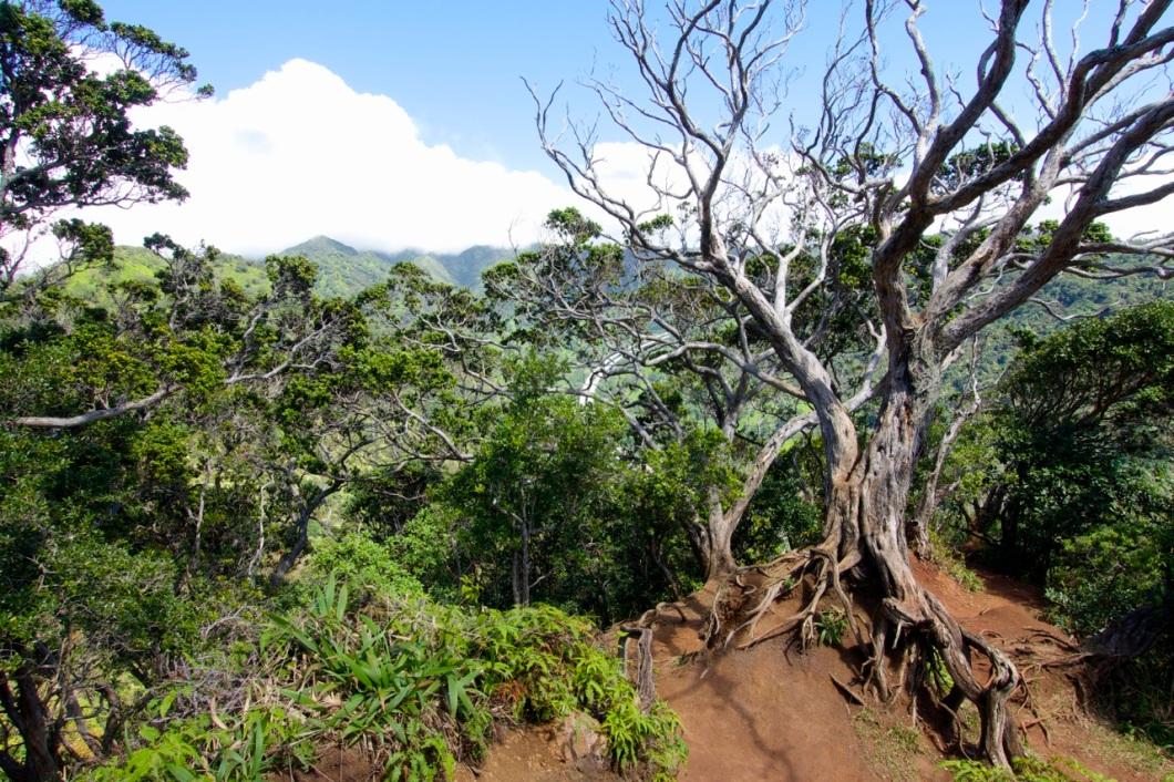 Aiea-Loop-Trail-10